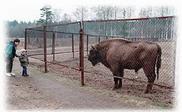 Заповедник зубро-бизонов